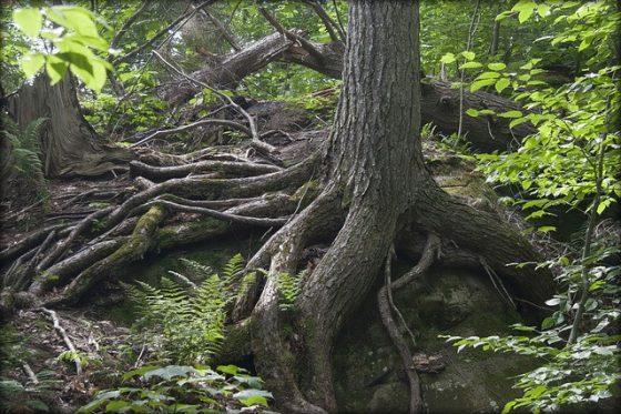 resilience og livskraft